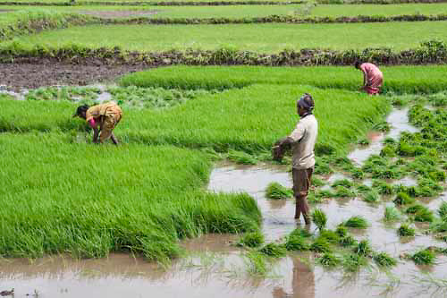 Policy on Agricultural Labourers | Social Security Act | Welfare ...